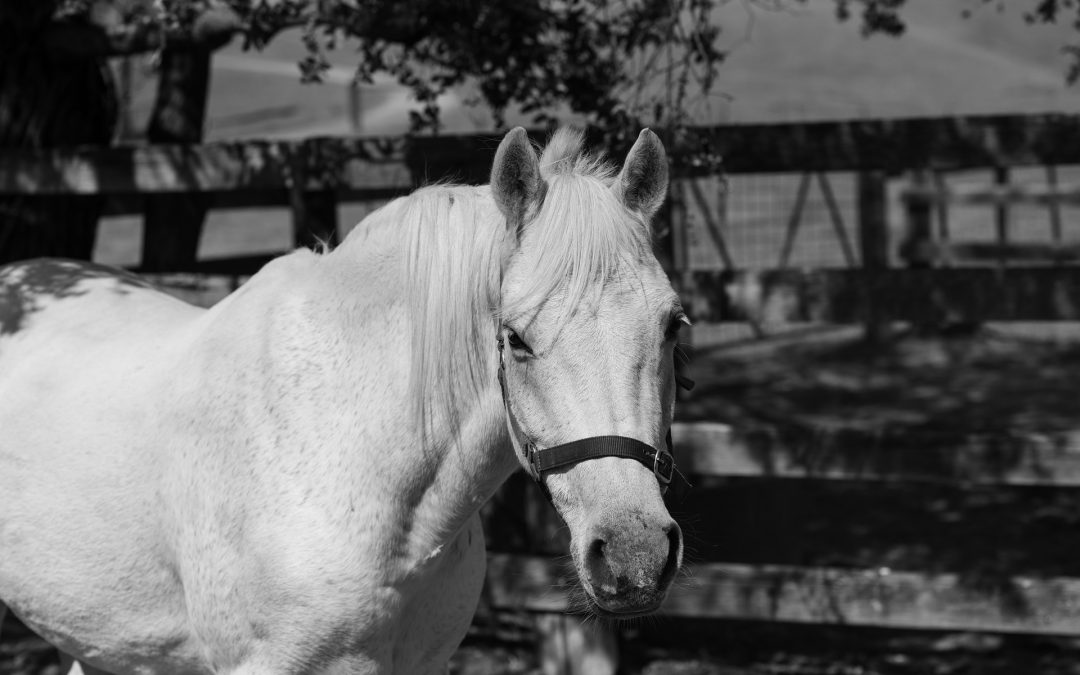 THE LANGUAGE OF EMOTIONS – LESSONS FROM A HORSE